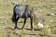 Wild horse graze Stock Photo
