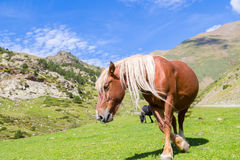 Wild horse grazing Royalty Free Stock Photography