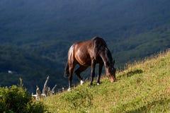 Wild horse grazing in Cerro Alarken Nature Reserve, Ushuaia, Argentina. Sunny aftern on hillside royalty free stock photo