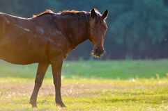 A wild horse head profile Stock Images