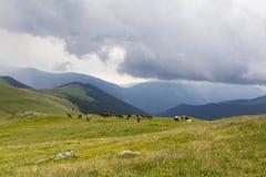 Wild horse herd Stock Photography