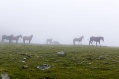 Wild horse herd Stock Image