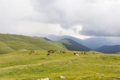 Wild horse herd Royalty Free Stock Photo