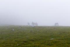 Wild horse herd Stock Photos