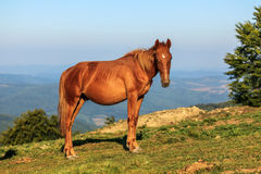 Wild horse on the hill Stock Photos
