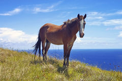 Wild Horse on hilltop. Wild horse animal hilltop free Royalty Free Stock Photography