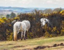 Wild horse. Stock Photos