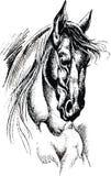 Wild horse Stock Photos
