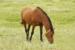 Wild horse. On the meadow Stock Photo