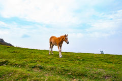 Wild horse in a mountain landscape Stock Image