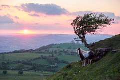 Wild horse on a mountain in sunshine, brecon beacons national park Stock Images