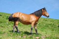 Wild horse in nature Stock Image