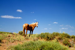 Wild horse in nature Stock Photography