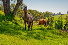 Wild horse in nature Stock Photo