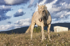 A wild horse in nature Royalty Free Stock Photo