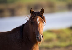 Wild Horse Portrait Stock Photo