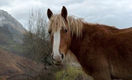 Wild Horse Portrait Stock Image