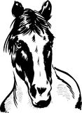 Wild horse portrait illustration Royalty Free Stock Photo