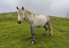 Wild horse portrait Royalty Free Stock Photography
