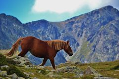 Wild horse in the Pyrenees Mountains in Andorra. This is a picture of a horse in the Pyrenees Mountains in Andorra. The horse probably belongs to a farmer but is Stock Photo