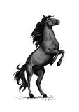 Wild horse racer rearing vector sketch. Horse on rears. Wild black mustang racer or stallion trotter rearing. Vector symbol for equine sport races or rides Stock Image