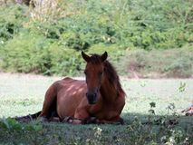 Wild horse relaxes in the shade. A wild horse takes refuge to relax in the shade royalty free stock image