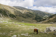 The wild horse in Retezat mountains Stock Images