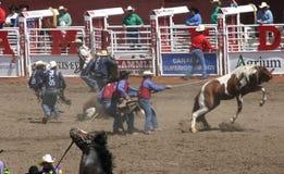 Wild horse round up Stock Photo
