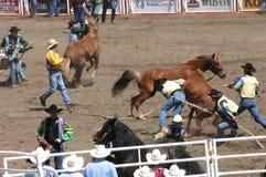 Wild horse round up Stock Image