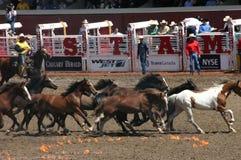Wild horse round up Royalty Free Stock Photo
