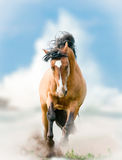 Wild horse runs on wild royalty free stock photography