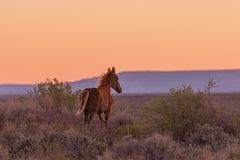 Wild Horse Silhouetted at Sunset royalty free stock photos