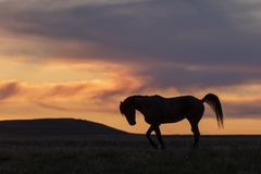 Wild Horse Silhouetted at Sunset stock images