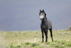 Wild horse standing alone stock photography