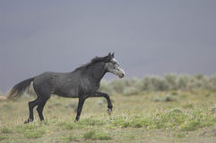 Wild horse standing alone Royalty Free Stock Photo