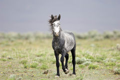 Wild horse standing alone Stock Photos