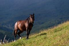 Wild horse standing on a sunny hillside in Cerro Alarken Nature Reserve, Ushuaia, Argentina stock photography