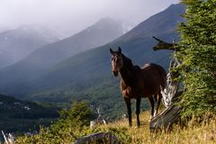 Wild horse standing on a sunny hillside in Cerro Alarken Nature Reserve, Ushuaia, Argentina royalty free stock photography