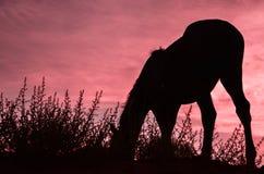 Wild horse at sunset Indian residences  Navajo tribe Royalty Free Stock Photo