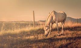 Wild horse in Tuscany Royalty Free Stock Photos