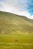 Wild horse in a valley. A wild horse in a valley Stock Photo