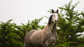 Wild horse in the wilderness Royalty Free Stock Images