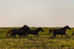 Wild horse in wildlife on golden sunset stock images