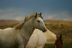 Wild Horse Yearling Stock Photo