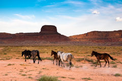 Wild horses. In a beautiful scenery Royalty Free Stock Photos