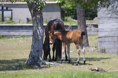 Wild Horses Stock Photography