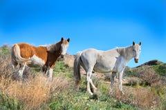 Wild horses animal Royalty Free Stock Image
