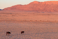 Wild horses of Aus - Namibia Stock Photo