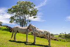 Wild horses in a beautiful landscape Stock Photography