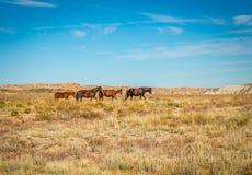 Wild Horses Stock Photography